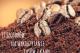 Sposoby na wykorzystanie fusów po kawie